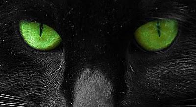 gatti-occhi-verdi-bis