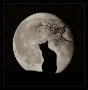 gatto-e-luna