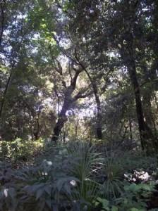 parco villa floridiana