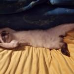 Kiki dormiente 1